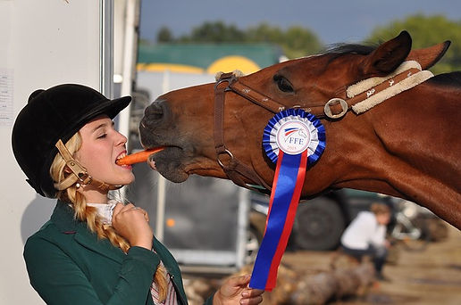 horse-934534_640.jpg