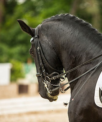 horse-3168576_640.jpg