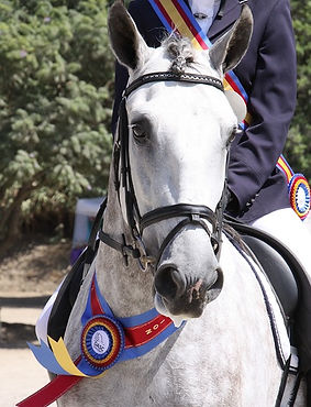 horse-show-2803977_640.jpg