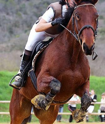 horse-3095667_640 - Copy.jpg