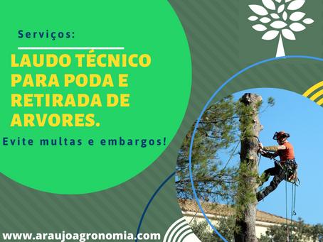 Poda e corte de arvores na cidade de São Paulo