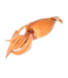 Cuttlefish ASMAKFISH 2.jpg