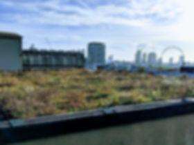 Green Roof London Biophilic Design