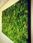Framed Moss Wall