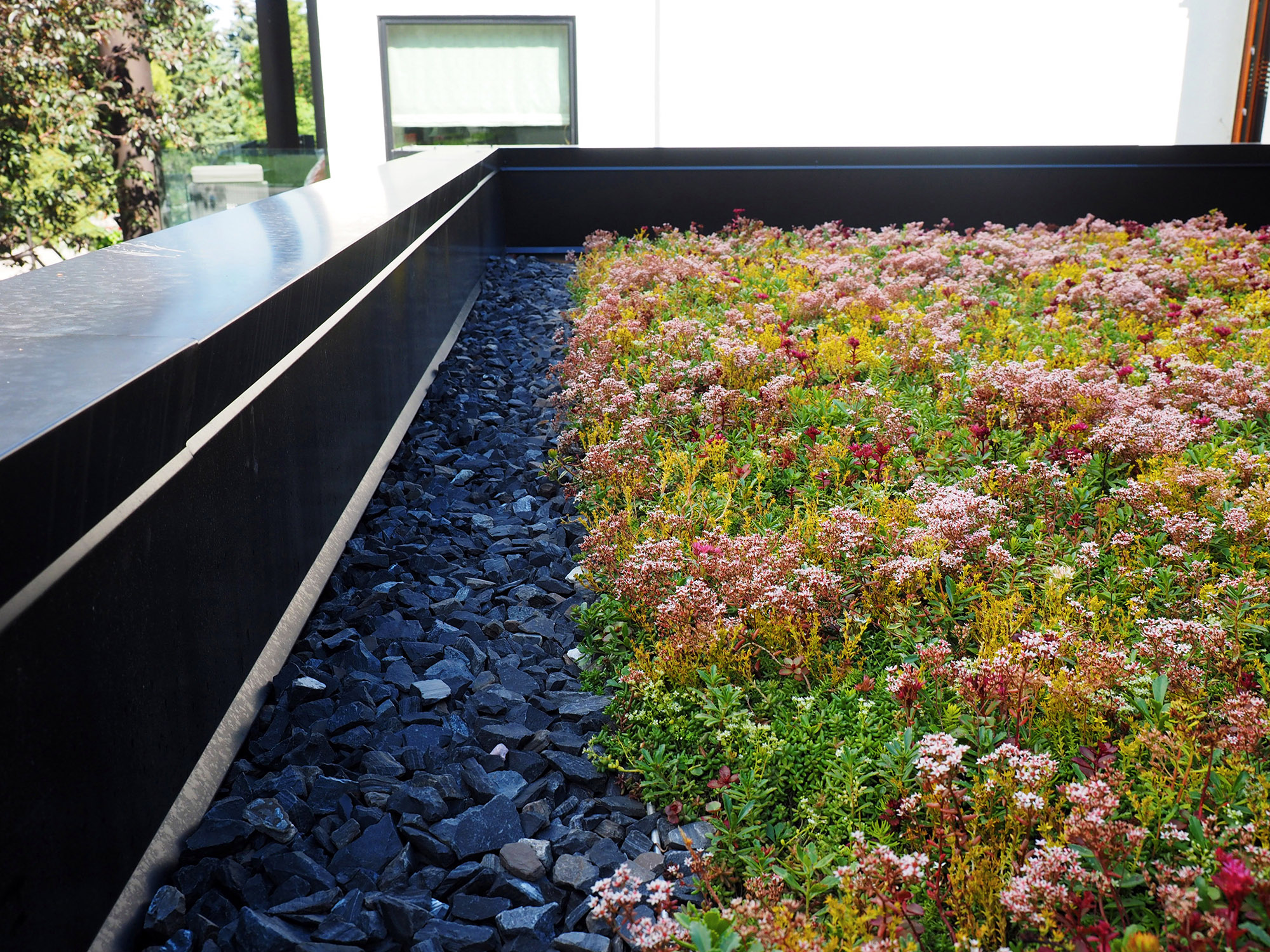 Sedum & Wildflower Green Roof
