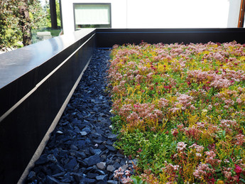 Sedum/Wildflower Mix Green Roof