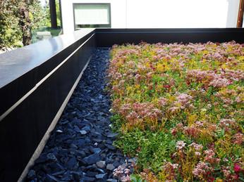 Sedum/Wildflower Mix Green Roof