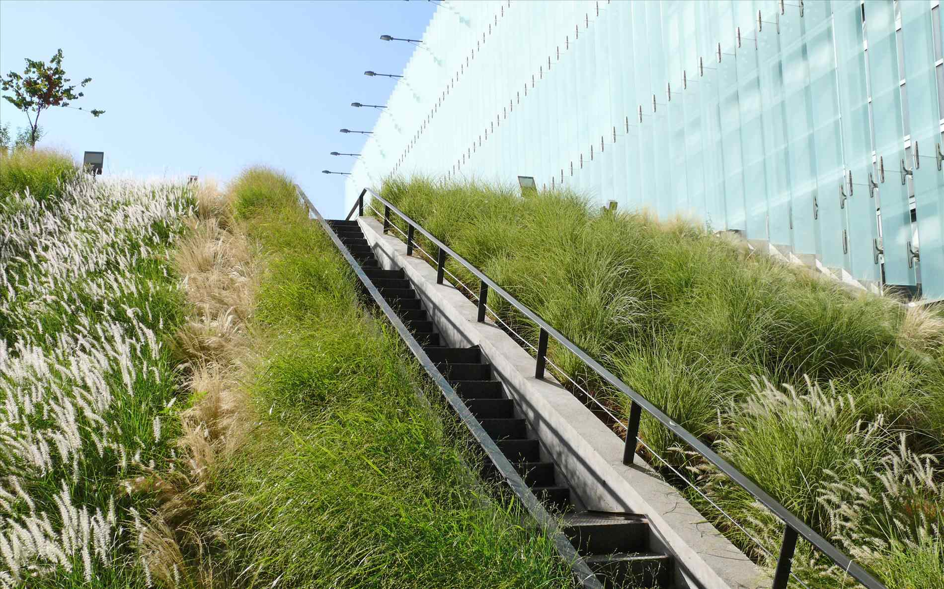 Wild Grass Green Roof