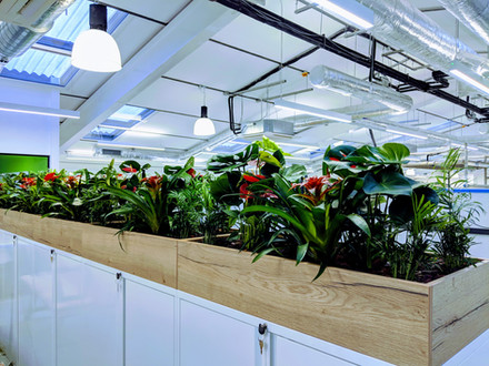 Trough Planters Design & Fit-out