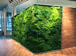 Preserved Moss Wall Composition