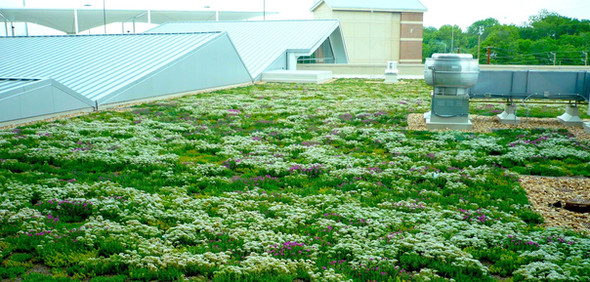 Sedum/moss Mix Living Roof