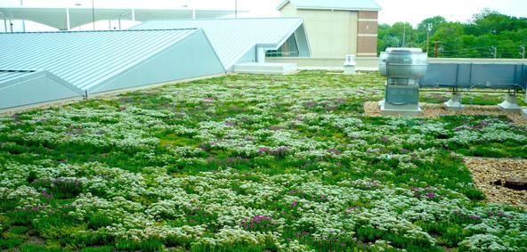 Sedum/moss Mix Living Roof