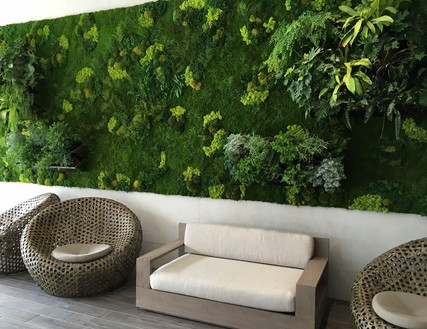 Living Wall x Preserved Moss