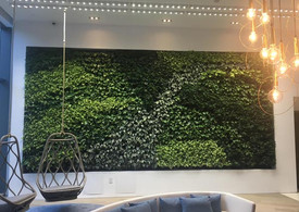GSky® Plant Systems, Inc. Interior Living Green Wall - Framed