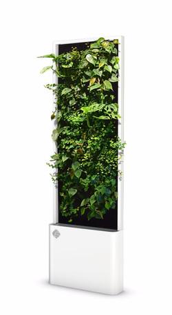 Hydroponic Green Wall - Small