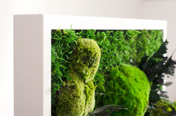 Framed Moss Wall