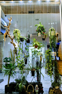 Hanging Plants Installations