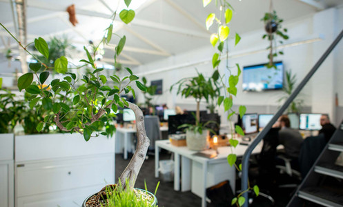 Office Planting Design & Fit-out