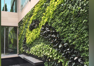 GSky® Plant Systems, Inc. Living Green Wall Installation