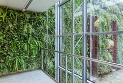 Interior and Exterior Green Wall
