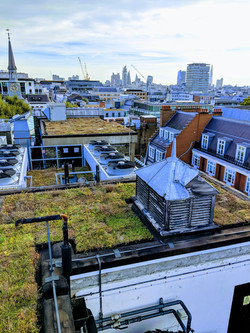 Green Roof Fortnum & Mason