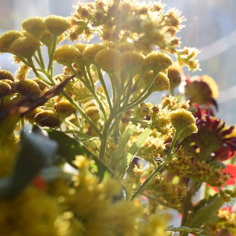 kvety2.jpg