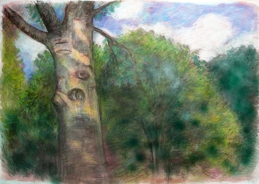 strom v parku.jpg