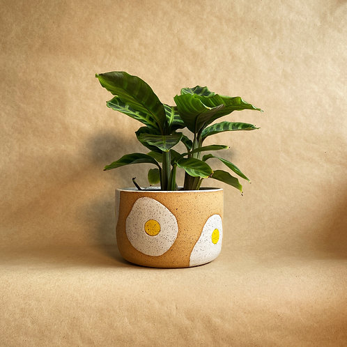 sunny-side-up planter
