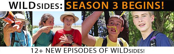 WILDsides Season 3 Begins!
