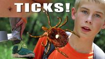 How to Avoid Ticks