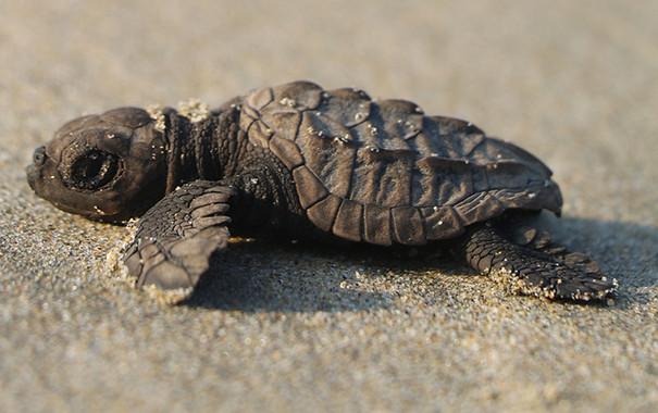 WILD Mexico — Sea Turtle