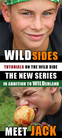 WILDsides new series