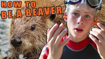 How to be a Beaver