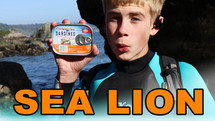 How to be a Sea Lion