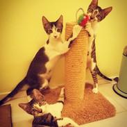 Schroder Lucy & Woody