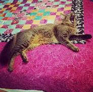 Kitty Cucumber