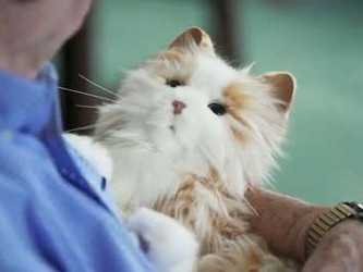 Robot Cat Benefits Health of the Elderly