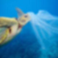 Marine Plastic - Workshop Image.jpg
