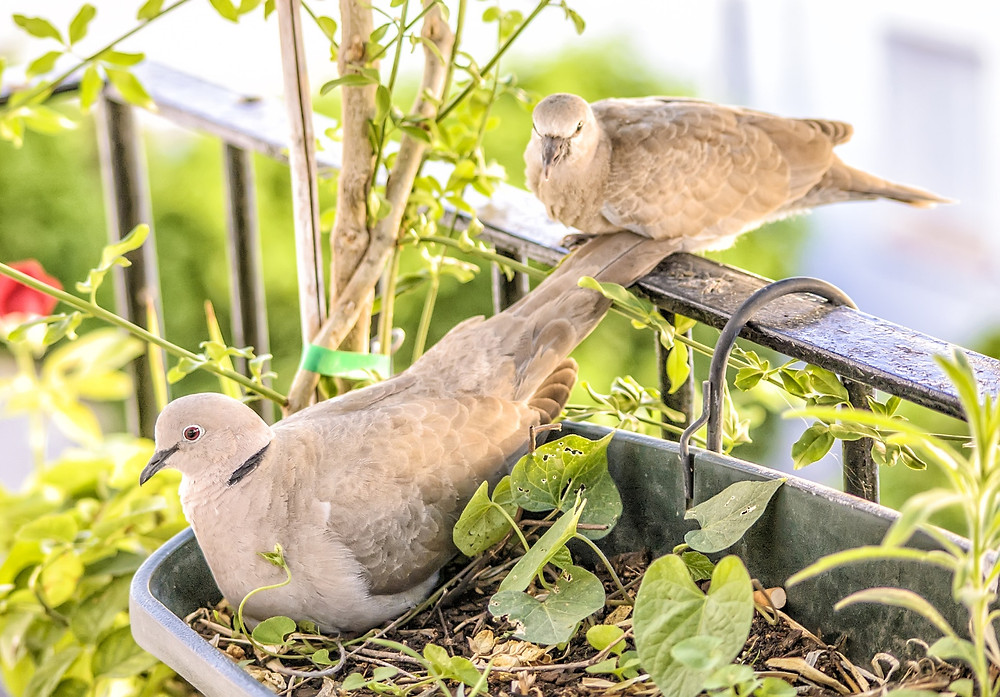 bird-friendly garden