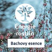 Energie_rostlin_Bachovy_esence_lepsi_oci