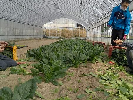 万農塾の体験講座で若者3人衆が収穫しました!