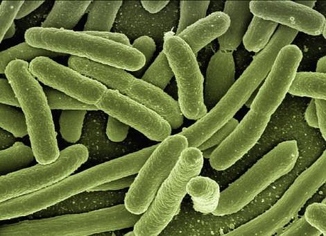 Microbiota: muito mais do que hóspedes do seu intestino