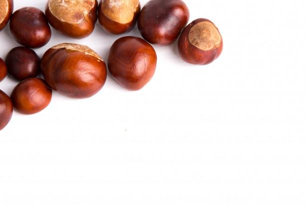 Oleaginosas: Benefícios à saúde (Parte 1)