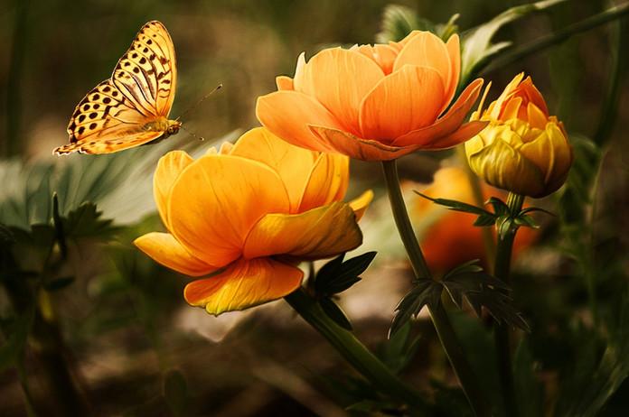 """O """"efeito borboleta"""" da Nutrição"""