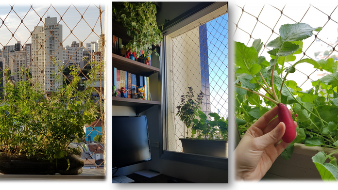 Horta Caseira - Parte III -  As aventuras e desventuras de plantar em apartamento