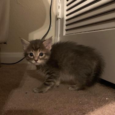 New kittens2.jpg