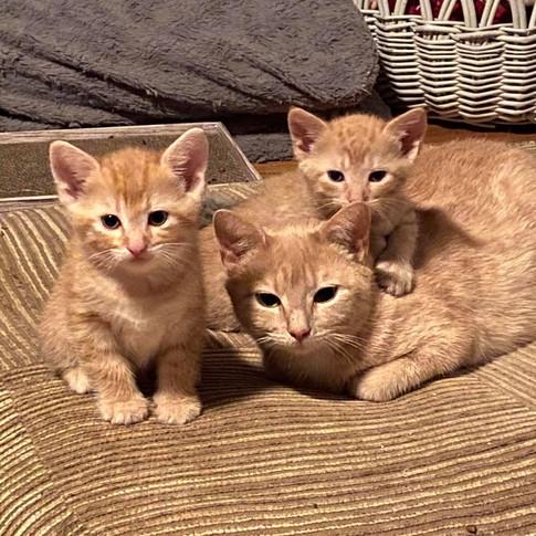 Blue, Chelsea and Georgie Boy.jpg