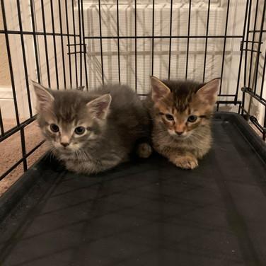New kittens1.jpg