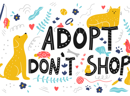 It's not just about the rescue - it's also about adoptions!
