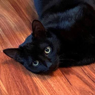 Lucy-blackcat1.jpg